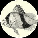 logo-comunicazione
